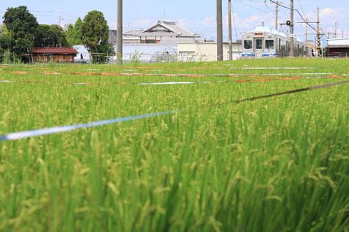 2011/9/11 水間鉄道 三ツ松~三ヶ山口