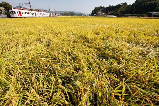 2011/10/9 和歌山電鐵貴志川線 大池遊園~西山口