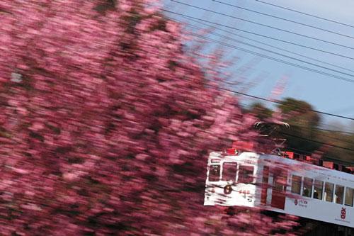 2011/2/19 山東~大池遊園