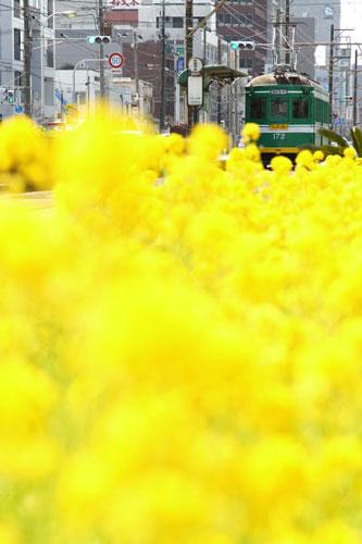 2011/4/5 阪堺電軌阪堺線 綾ノ町~神明町