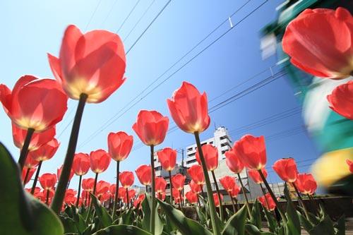 2011/4/5 阪堺電軌阪堺線 神明町~妙国寺前