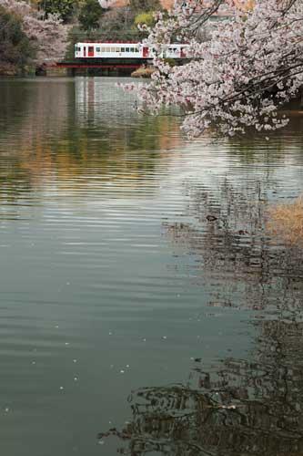 2011/4/9 大池遊園