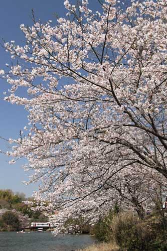 2011/4/10 大池遊園