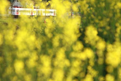 2011/4/17 大池遊園~西山口