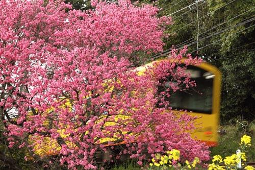 2011/4/24 三岐鉄道北勢線 楚原~麻生田