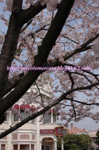 09plazasakura-1.jpg