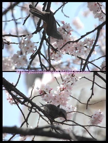 09plazasakura-8.jpg