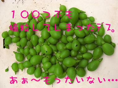 090613kyoho04.jpg
