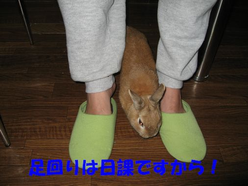 日本百名城の旅 江戸城 『長子相続』