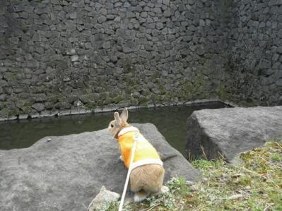 ed.江戸城 20110306 005
