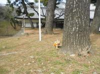 ed.江戸城 20110306 008