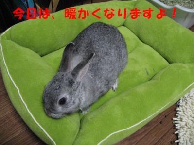 sa-ko 20110311 001