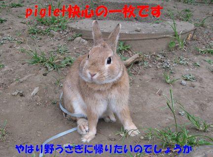 pig 20110323 001