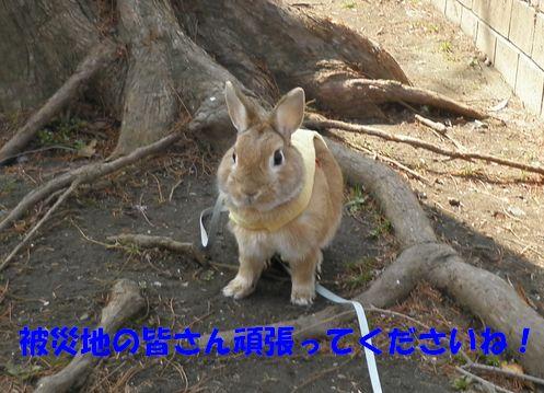 pig 20110324 001