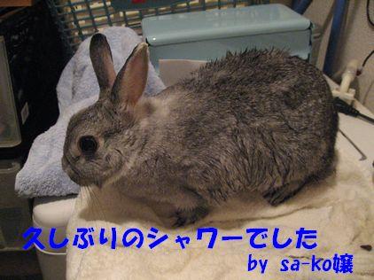sa-ko 20110325 001
