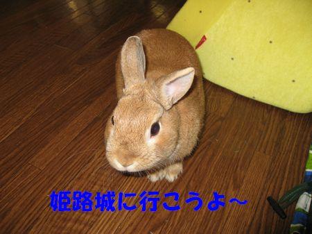 pig 20110328 001