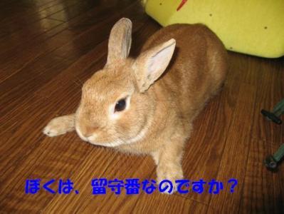 pig 20110423 001