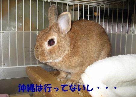 pig 20110429 001