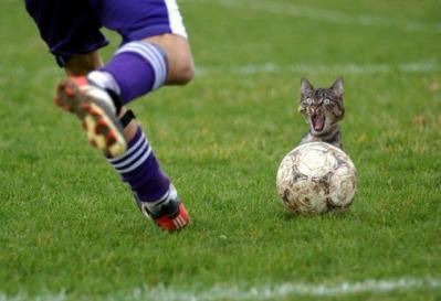 f-Funny-Cat-3539.jpg