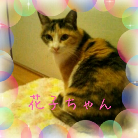 花子ちゃん2012-01-30_12.54.44decr