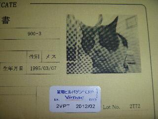 P1000822(1).jpg