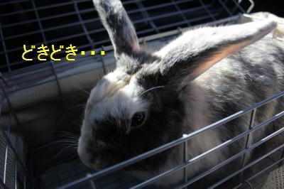 002_convert_20110912183705.jpg