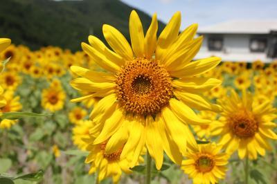 019_convert_20110811084509.jpg