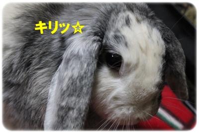 020_20120119033352.jpg