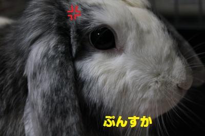 020_convert_20110910154600.jpg
