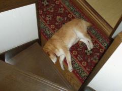 邪魔なイヌ。(笑