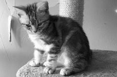 ネコちゃんa