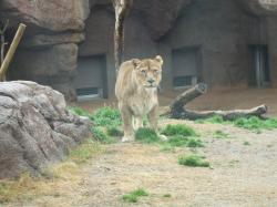 動物園10