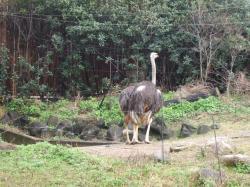 動物園12