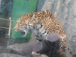 動物園16