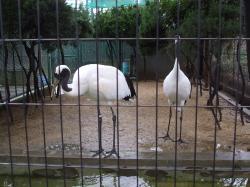 動物園23