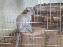 動物園26