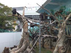 動物園29