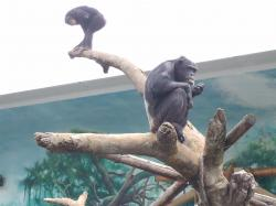 動物園30