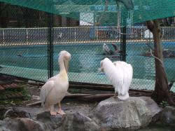 動物園31