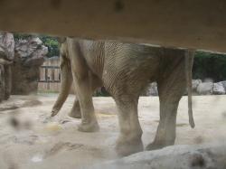 動物園33