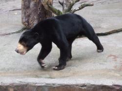 動物園36
