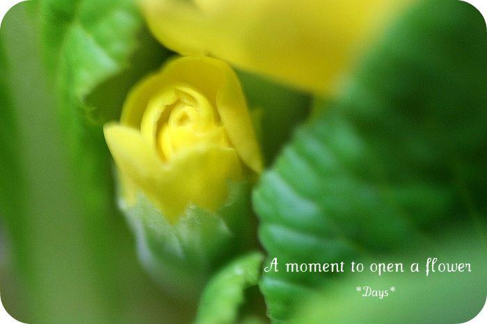 花開く瞬間