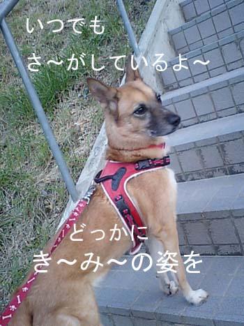 CA380139.jpg