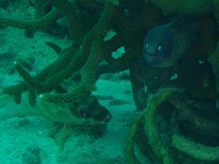 タオ島 魚