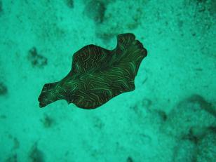タイ|タオ島|魚|ダイビング