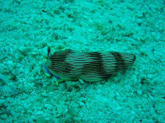 タイ タオ島 海 魚