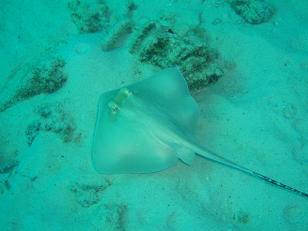 タイ|タオ島|ダイビング|魚|