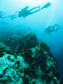 タイ|タオ島|ダイビング|魚|風景