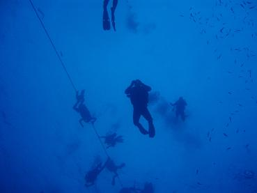タイ|タオ島|海|魚|ダイバー