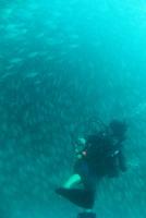 タオ島 ダイビング マンゴーベイ